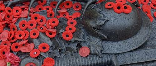 Poppies on Memorial